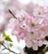 城山小学校の桜が語る平和